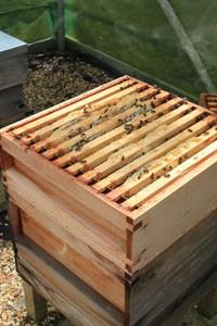 Hive construction